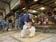 2005 Shearing Match Pic 1