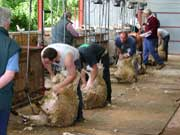 2005 Shearing Match Pic 2